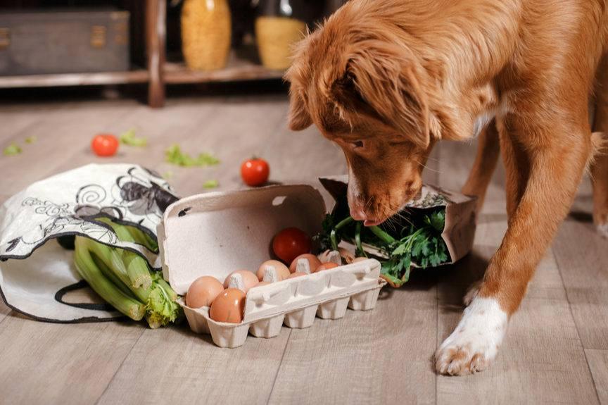 Żywienie kotów oraz psów. Rodzaje karm